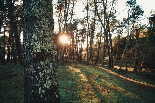 Forest during a sunset with the tree shadows and a green grass with copy space