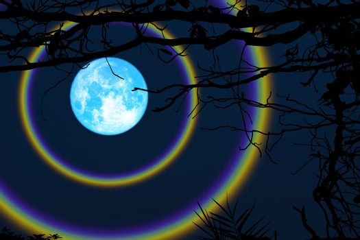 harvest blue moon double halo branch trees in the night sky