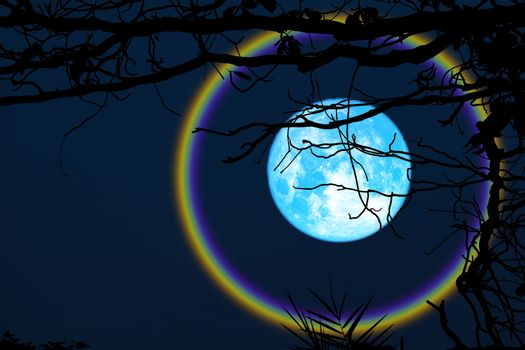 harvest blue moon halo silhouette branch trees in the night sky