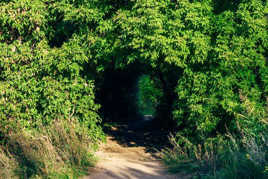 Hidden walkway in forest
