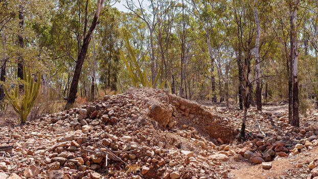 Prickly Pear Invasion In Central Queensland Australia