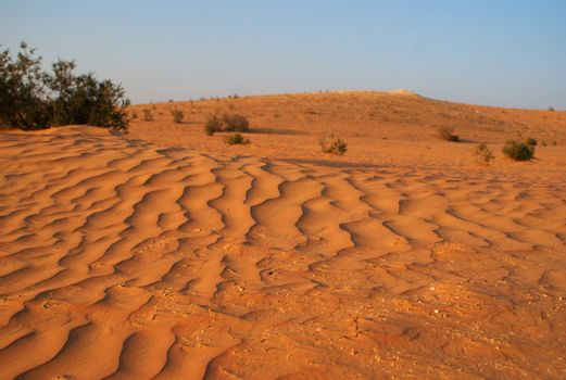 sand desert at summer in arabia and middle east
