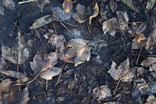 Detailed close up view on a forest ground texture with lots of c