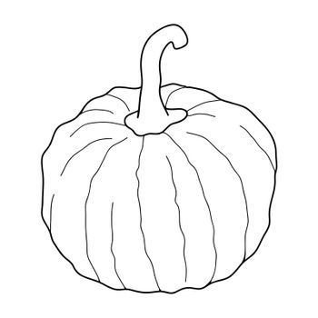 Pumpkin transparent vector illustration isolated on white background. Healthy vegetarian food. Doodle style. Decoration for greeting cards, posters, patches, prints for clothes, emblems.