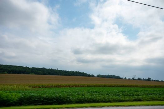 Looking Out the Car at a Huge Field Full of Fresh Crops Moving By