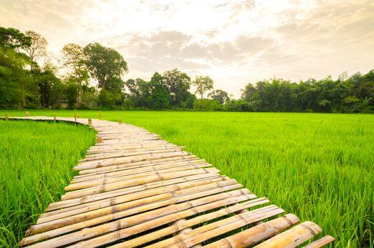 Wooden bridge walkway Bamboo bridge spanning to the rice field with sunlight.