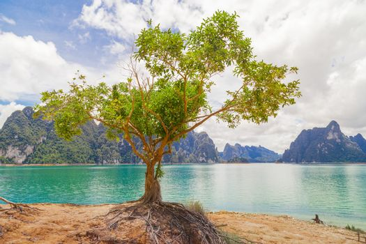 Beautiful tree on a lake with mountains at Ratchaprapha Dam or Khao Sok National Park, Surat Thani Province, Thailand