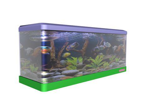 colorful aquarium with aquatic plants and fish