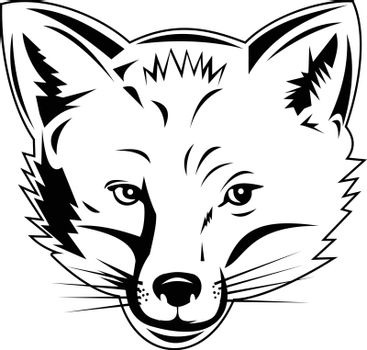 Retro style illustration of head of a red fox, largest of the true foxes and the most widely distributed members of the order Carnivora, viewed from front on isolated background in black and white.