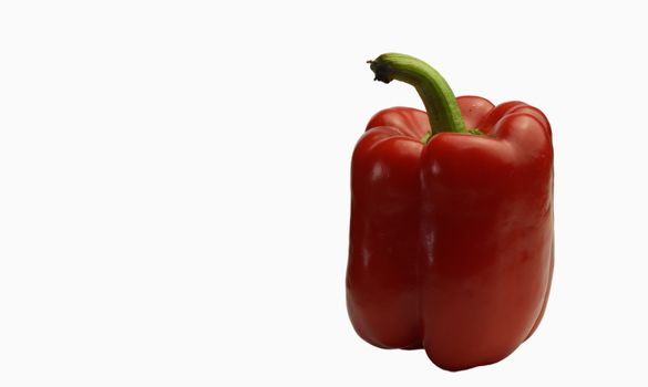 Red chili isolated on white background with space to place text