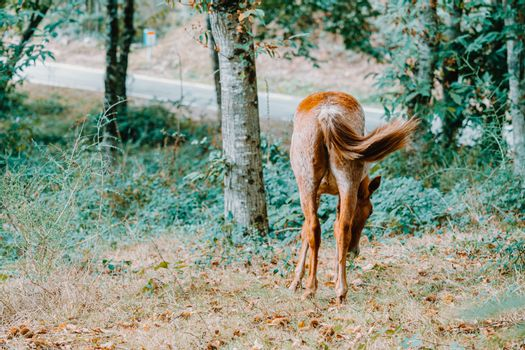 Background with a horse giving his back with copy space in the forest during autumn