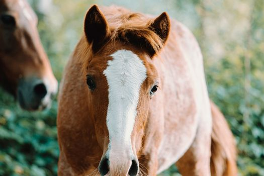 Cute horse looking directly to camera on the forest during autumn