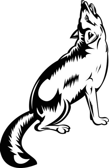 Retro style illustration of a red fox, largest of the true foxes and the most widely distributed members of the order Carnivora, howling viewed from side on isolated background in black and white.