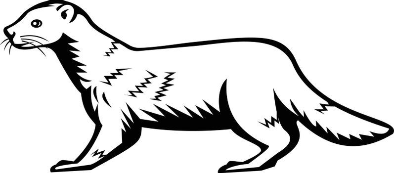 Retro style illustration of a European mink, Russian mink or Eurasian mink, a semiaquatic species of mustelid native to Europe viewed from side on isolated background done in black and white style.
