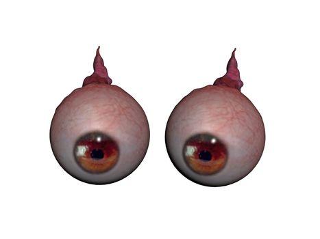 Eyeballs with optic nerve and iris