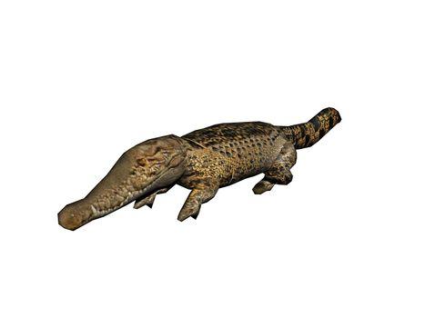 original crocodile with a long snout