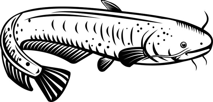 Retro woodcut style illustration of a Silurus biwaensis, the giant Lake Biwa catfish or Biwako-onamazu, a large predatory catfish endemic to Lake Biwa Japan on isolated background in black and white.
