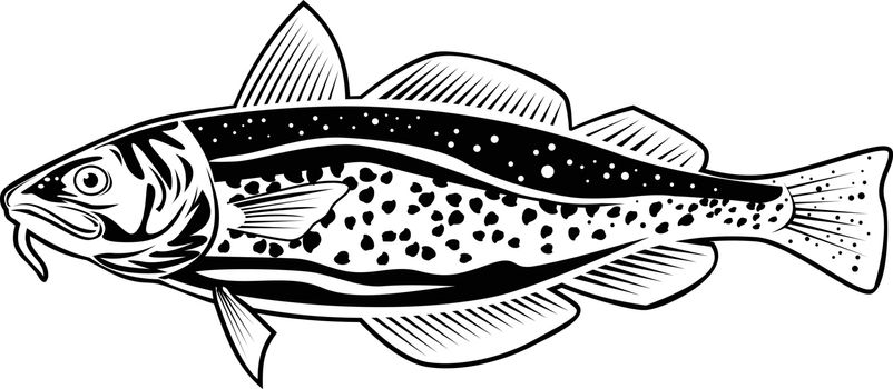 Retro style illustration of an Atlantic cod Gadus morhua, a benthopelagic fish of the family Gadidae commercially known as cod or codling viewed from side on isolated background in black and white.
