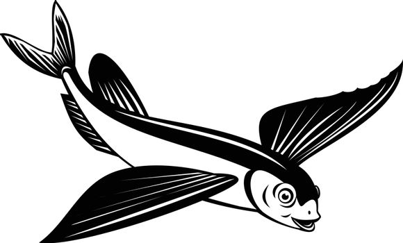 Retro style illustration of a Sailfin flying fish or flying cod viewed from side on high angle on isolated background done in black and white.