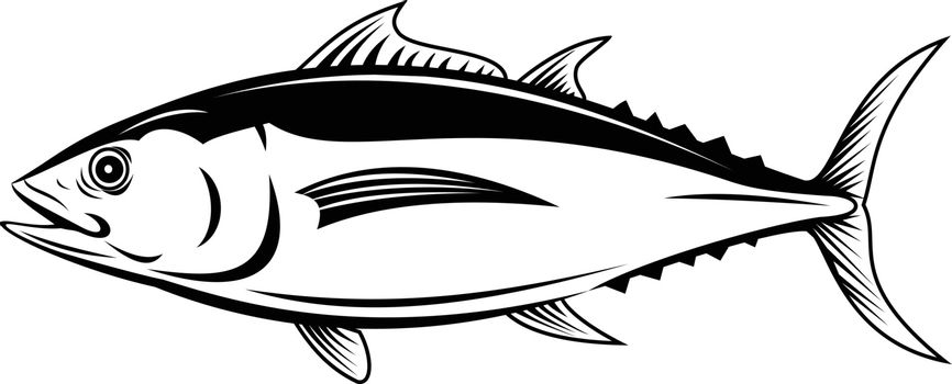 Retro style illustration of an albacore Thunnus alalunga or longfin tuna, a fish species of tuna of the order Perciformes, viewed from side on isolated background in black and white.