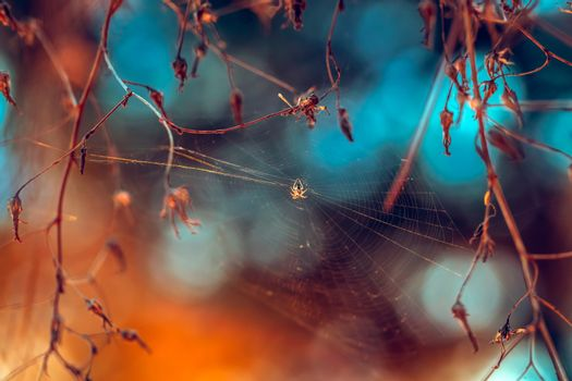 Beautiful Autumn Background. Little Spider Weaved a Web Between Tree Branches in the Forest. Amazing Beauty of Wild Nature.