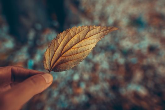 Closeup Photo of a Dry Tree Leaf in Hands. Change of Seasons Concept. Autumn has Come.