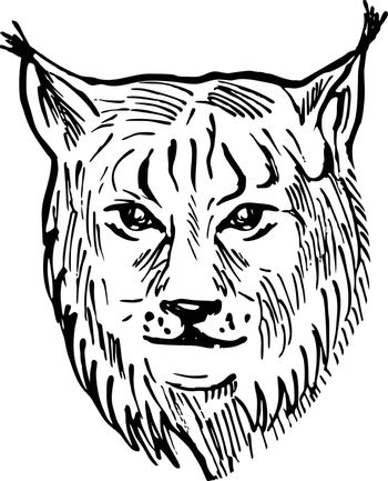 Head of a Eurasian Lynx Front View Scratchboard Style Black and White