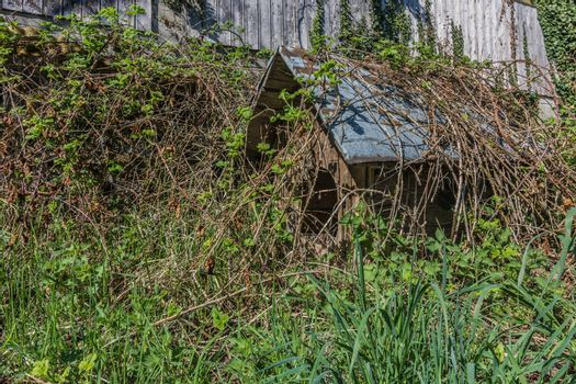 old overgrown doghouse in a garden