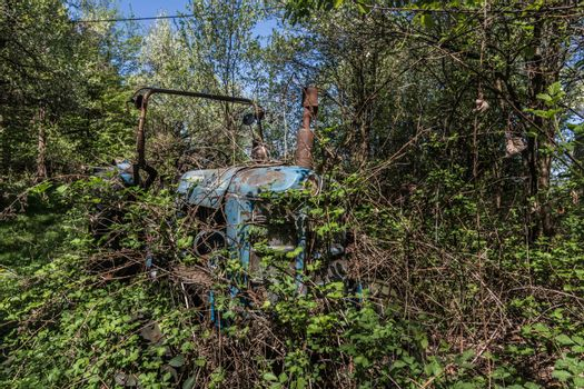 overgrown blue tractor from an old farm