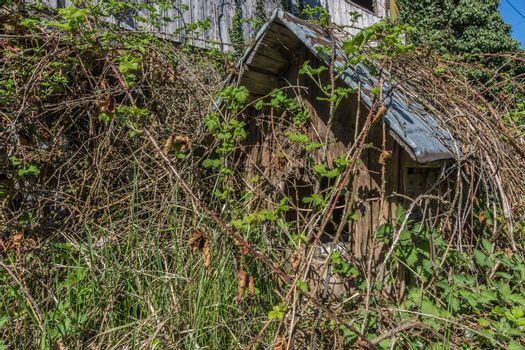 Overgrown doghouse on a ground in the mountains