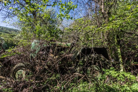 Old green overgrown tractor in the forest