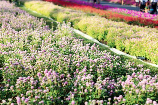 Flower plot in garden.