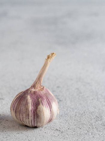 Garlic Bulb on gray cement background. Garlic with copy space
