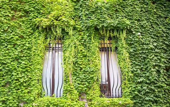 MILAN, ITALY - CIRCA AUGUST 2020 - Integration of nature and real estate on this old Italian building