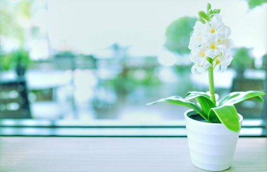 Vintage style image, ornamental plant on white glass pot with copy space.