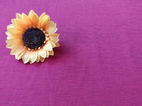 Sunflower yellow on fuchsia sheet