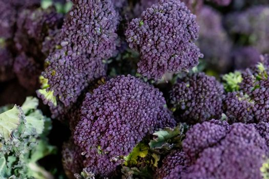 Close up of purple sprouting broccoli florets