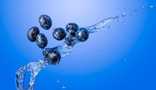 Isolated shot of plums splashing with water, isolated on blue background. Blue themed fruits
