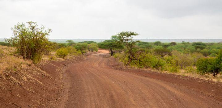 Landscape in Kenya, road through the national park