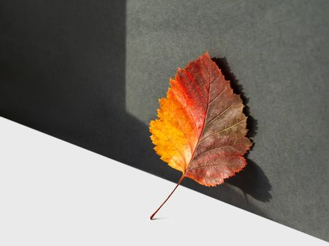 Bright and colorful autumn leaf. Monochrome geometry with light and shadow. Minimalism. Fall season. Still life with hand sunlight.