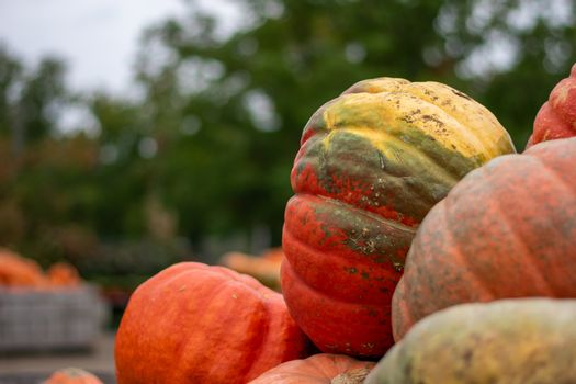 A Large Orange and Green Pumpkin in a Pile With Other Pumpkins at a Farmer's Market