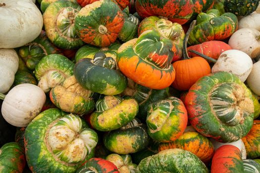 A Pile of Ugly Pumpkins in a Wooden Box at a Farmer's Market Filling the Frame