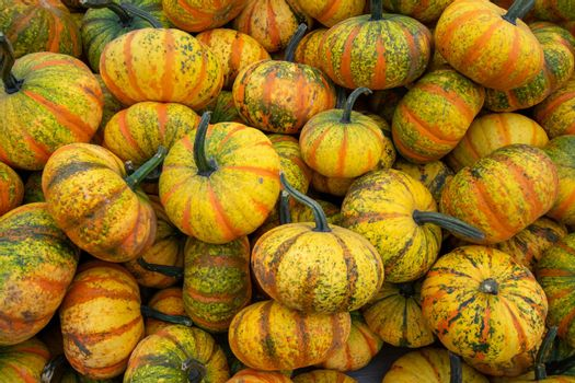 A Pile of Small Yellow Striped Pumpkins in a Box at a Farmer's Market Filling the Frame