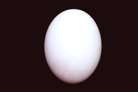 One fresh egg. Ingredient concept of cooking isolated black background.