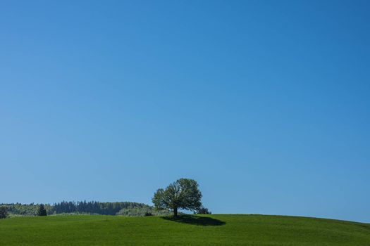 Single tree in the middle of a green spring landscape