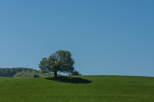 single tree with shadow in spring