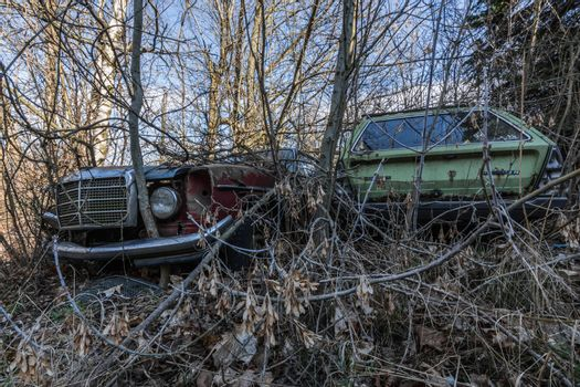 Old rusty cars in an overgrown garden with trees