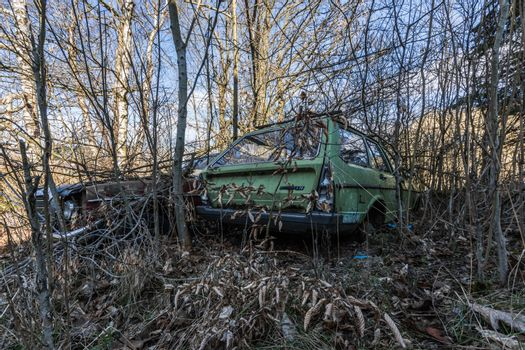 overgrown cars in a garden property
