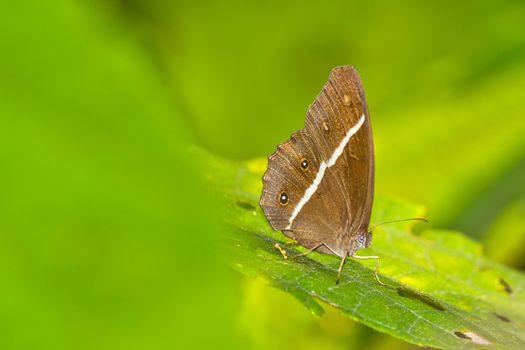 Butterfly, Royal Bardia National Park, Nepal