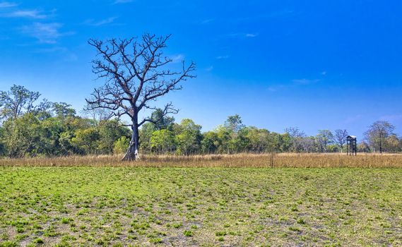 Grasslands and Forest, Royal Bardia National Park, Nepal